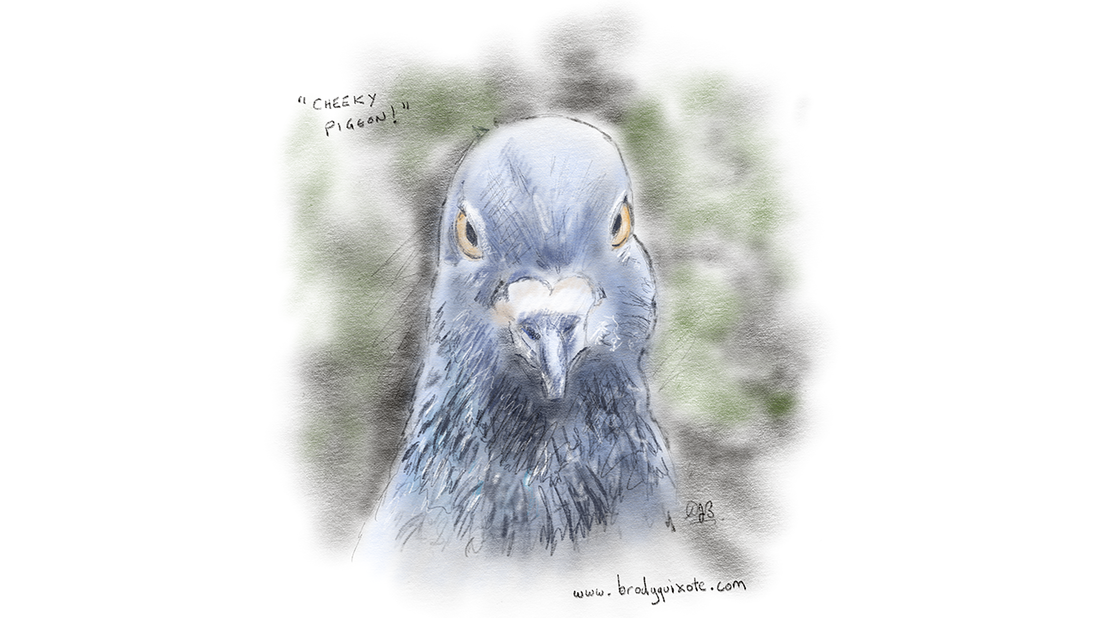 A loose sketch of a pigeon by brodyquixote